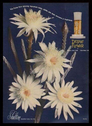 shultondesertflower_bornunicorn